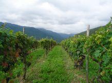 Экскурсия Вино и оливкое масло (Альбенга, др.) cod.exc01